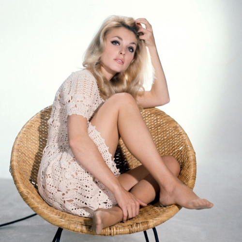 Sharon Tate, circa 1968, star of The Fearless Vampire Hunters (1967)