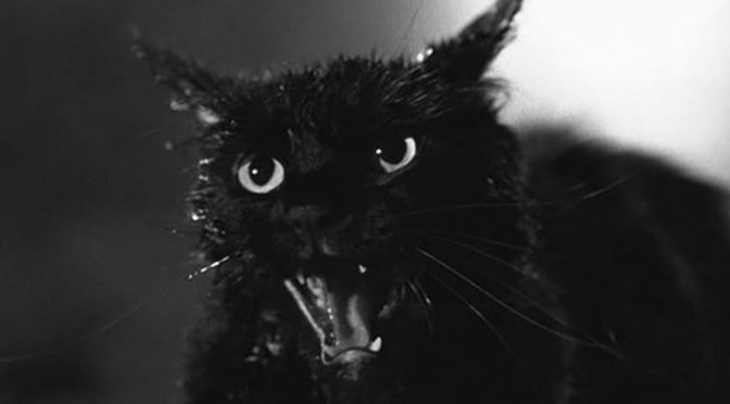 TALES FROM THE DARKSIDE's Cat from Hell